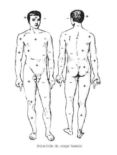 Polarités du corps humain